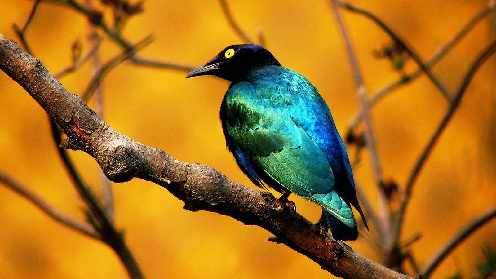 Animals Zoo Park Birds Desktop Wallpapers Bird Beautiful 1600x900