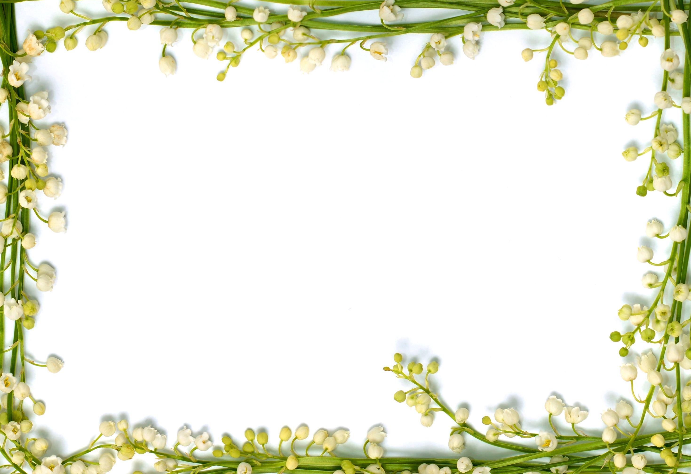 Flower Wallpaper Border Rose Pictures 2938x2014