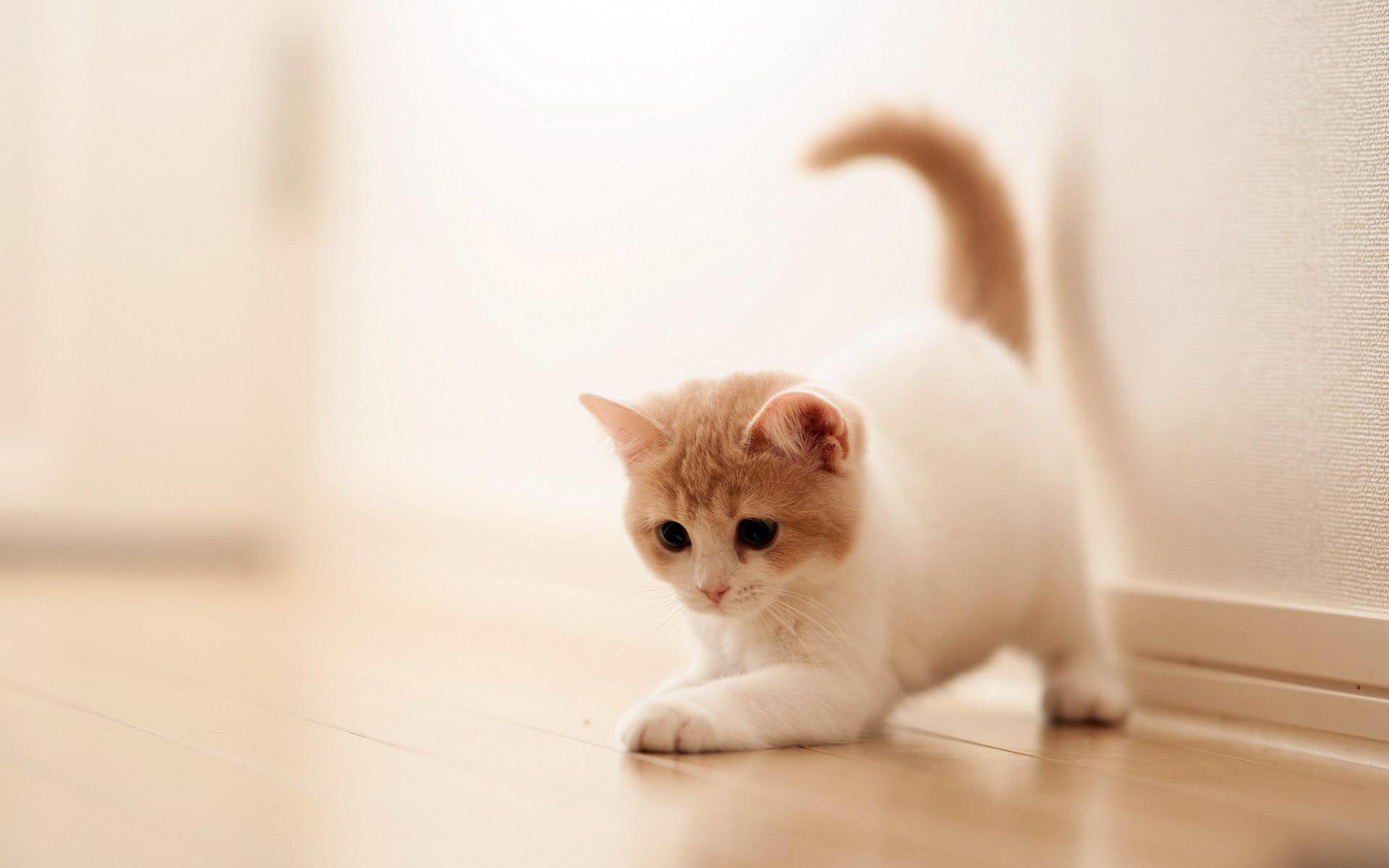 Cat Wallpapers HD Pictures One HD Wallpaper Pictures Backgrounds 1920x1200