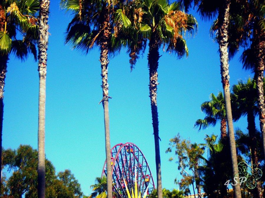 California Palm Trees Wallpaper California palm trees by 900x675