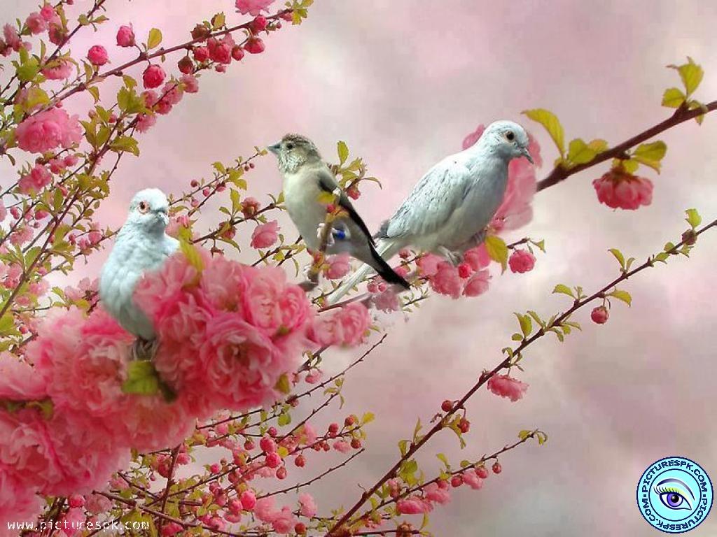 spring birds wallpaper free