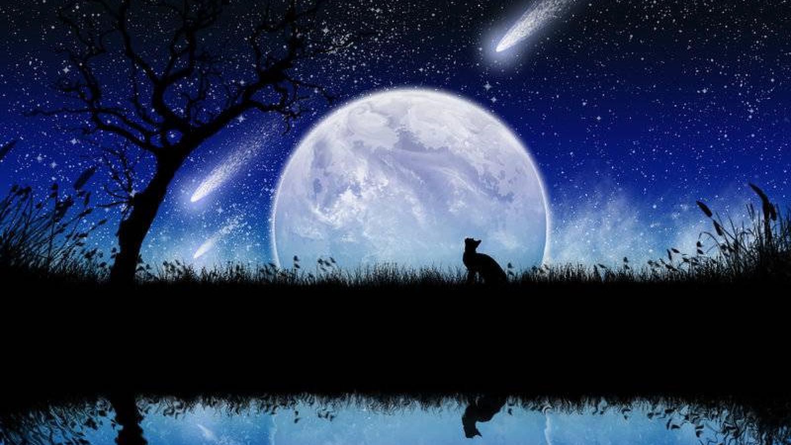 Stars cats moon outdoors pond shooting star tree wallpaper   20314 1600x900