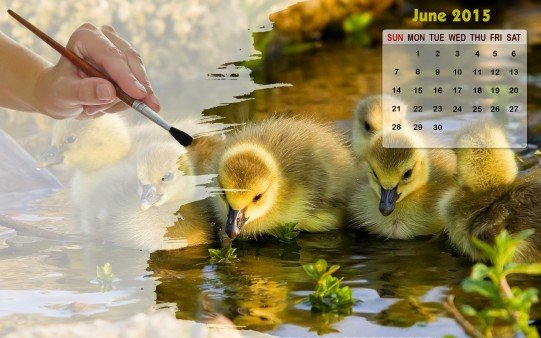 Month wise Calender Wallpapers Calendar Wallpaper June 2015 541x338
