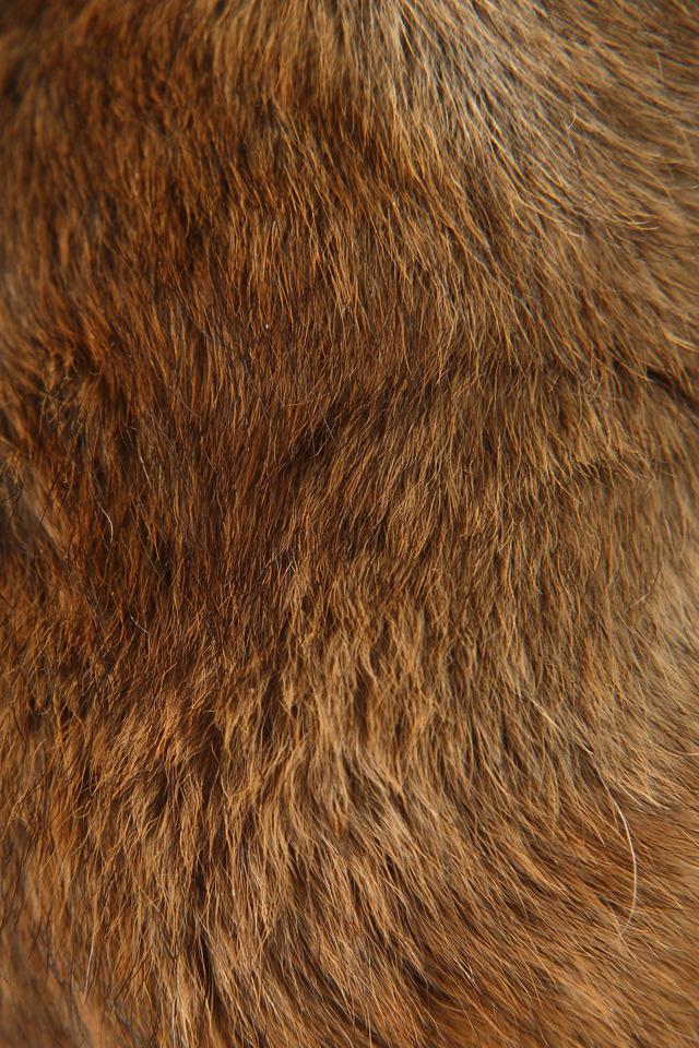 Furry Iphone Wallpaper Wallpapersafari