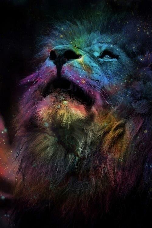 galaxy lion lions rainbow roar 500x750