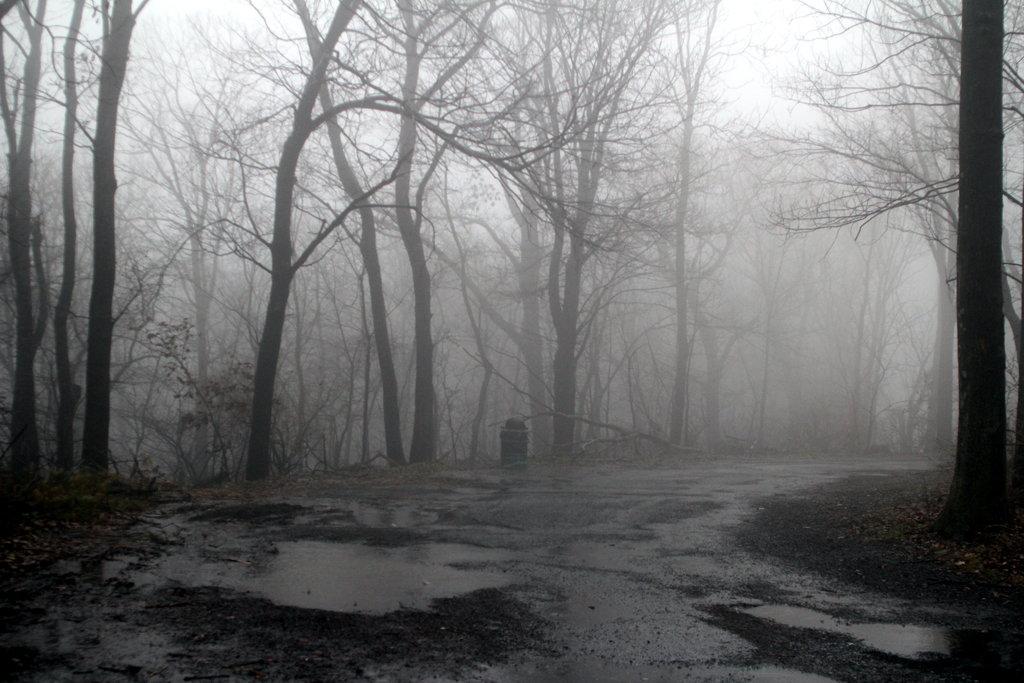 Foggy Forest Tumblr Background Foggy 1 by twilitesmuse 1024x683