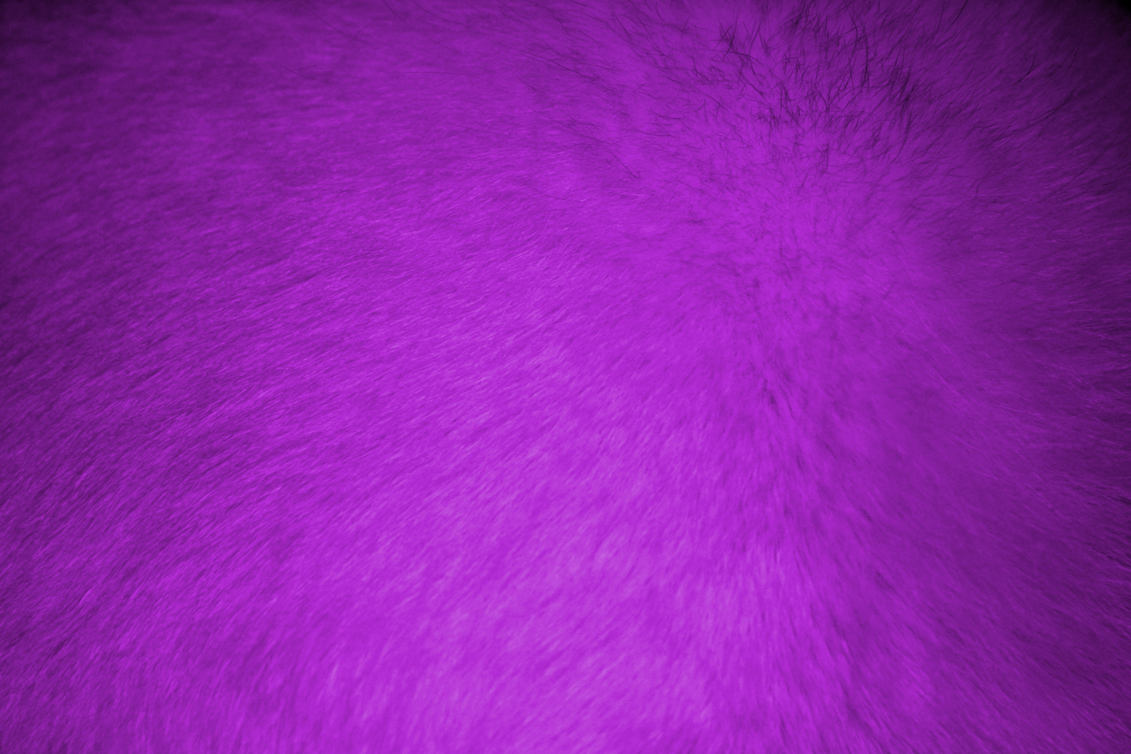 Purple Fur Texture   High Resolution Photo   Dimensions 3888 3888x2592