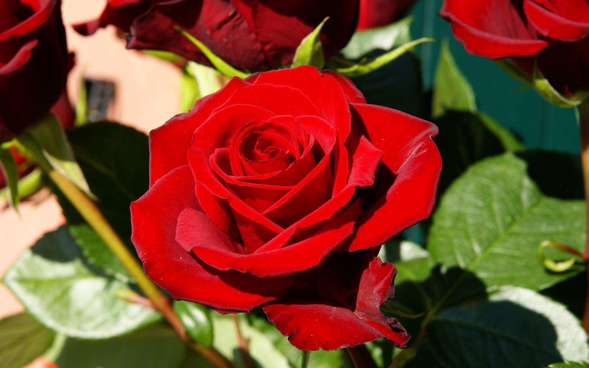 Plog Content Image Es Flower Red