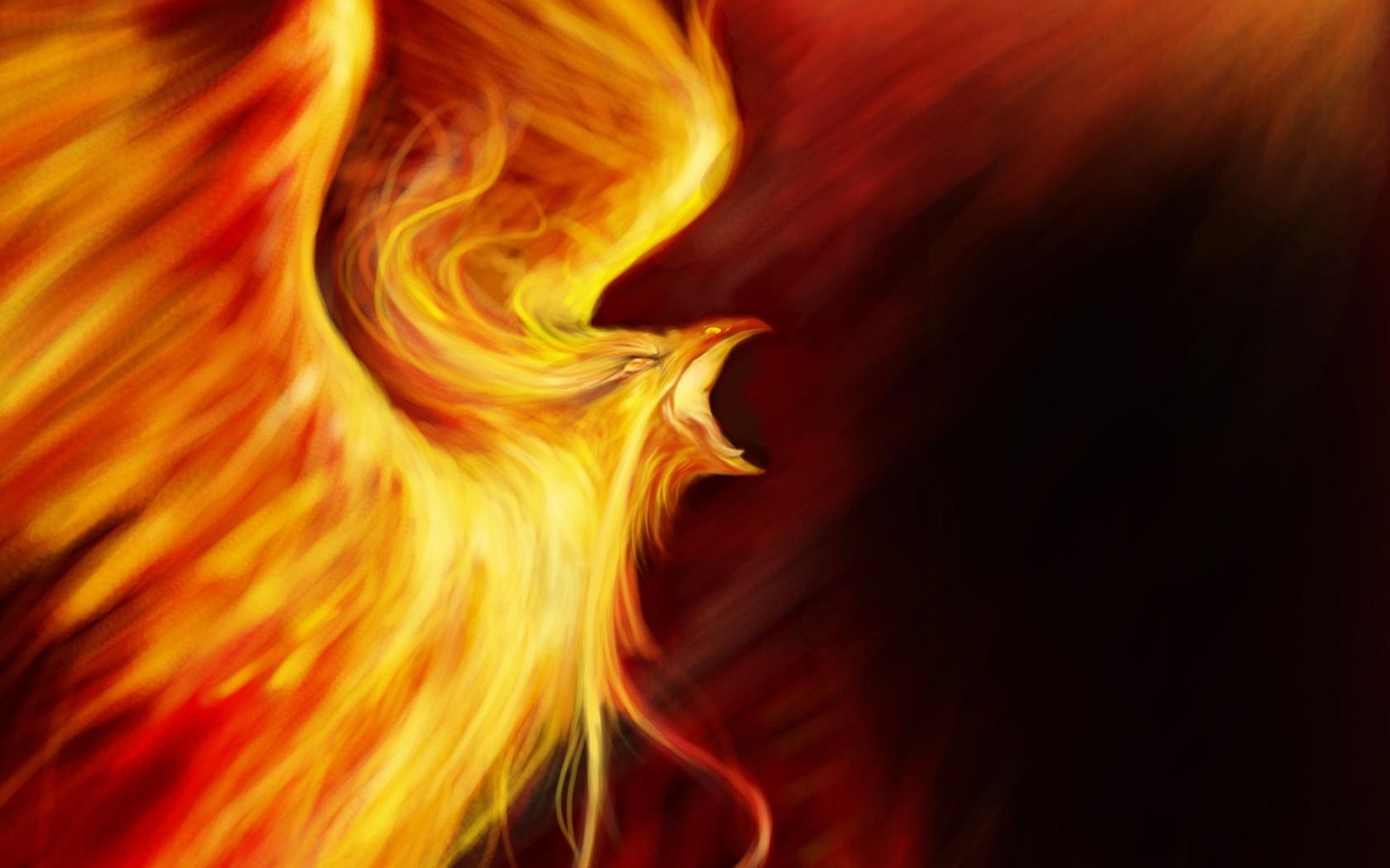 download phoenix bird wallpaper which is under the birds wallpapers 1680x1050