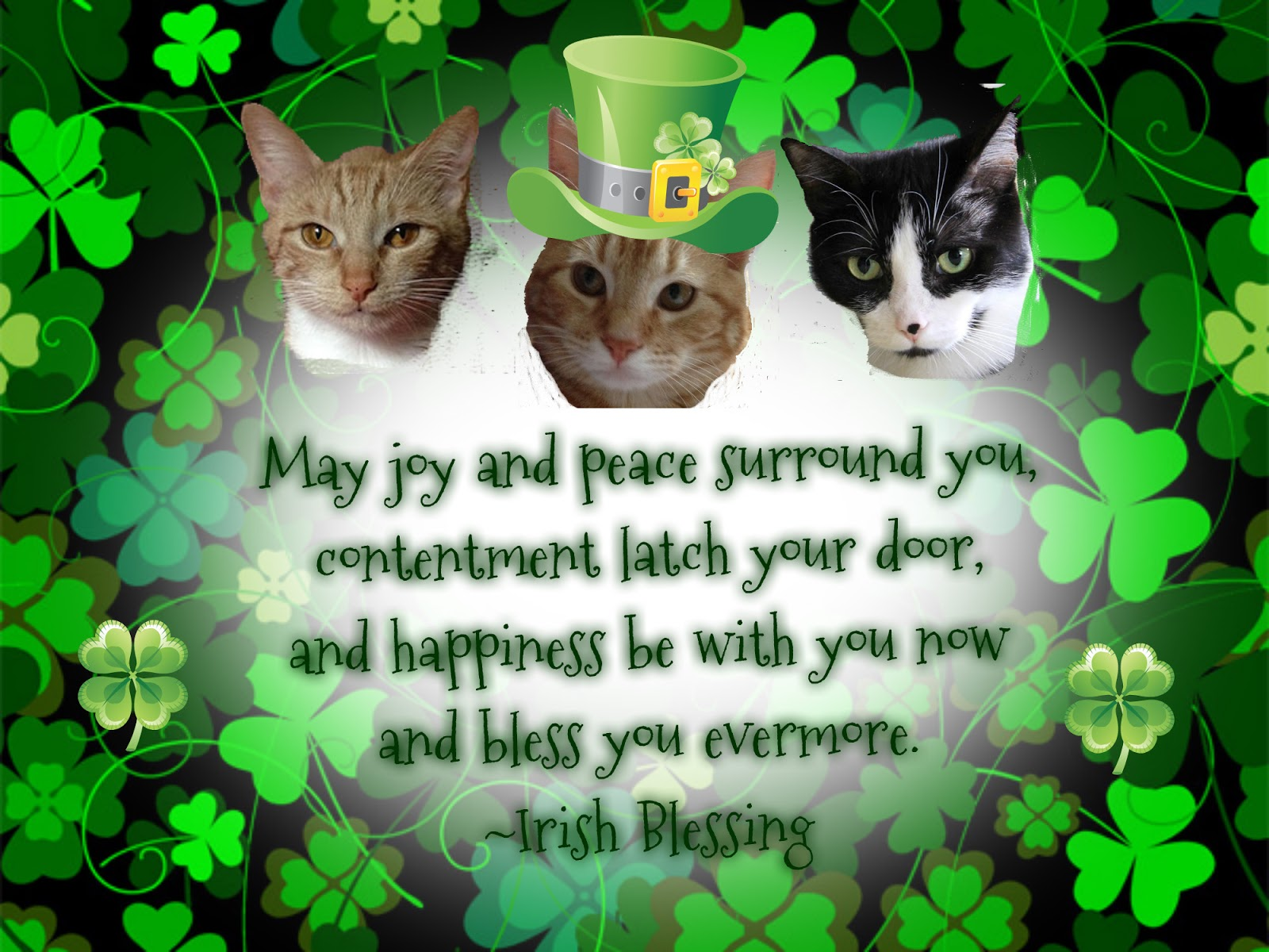 GF1MT87 St Patricks Day Cat Wallpaper 1600x1200   Picseriocom 1600x1200