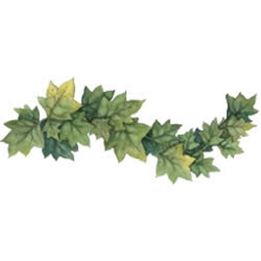 Ivy Leaf Border 525x525