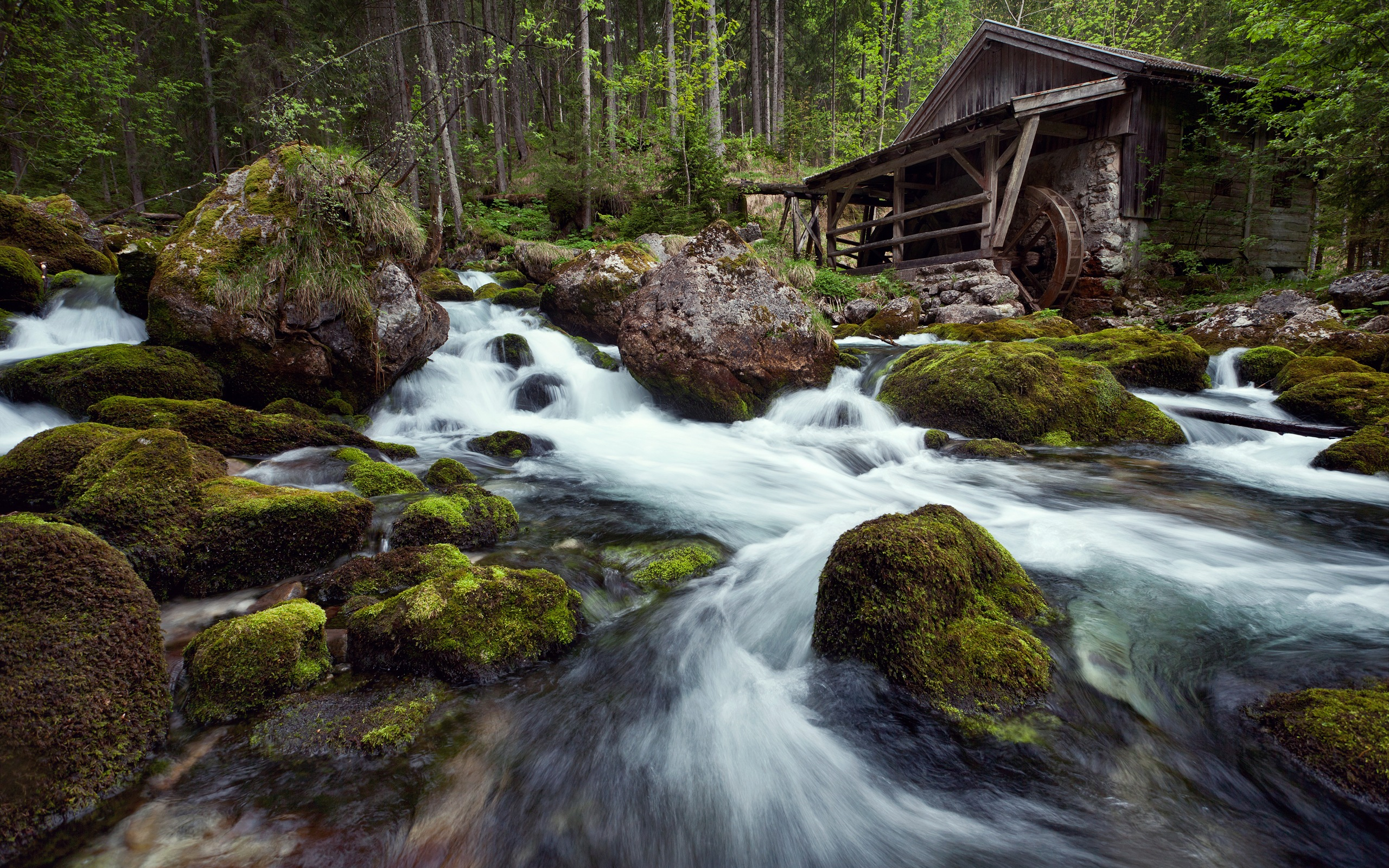 River In Forest Wallpaper Wallpapersafari