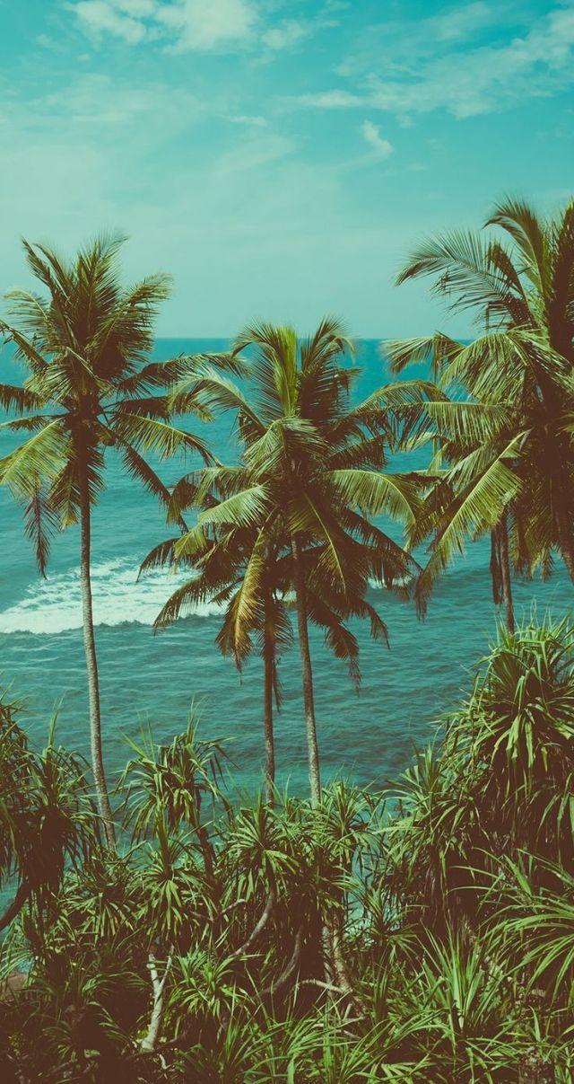 Pin by Kavishwara Sangeeth on ksl Palm trees beach photography 640x1207