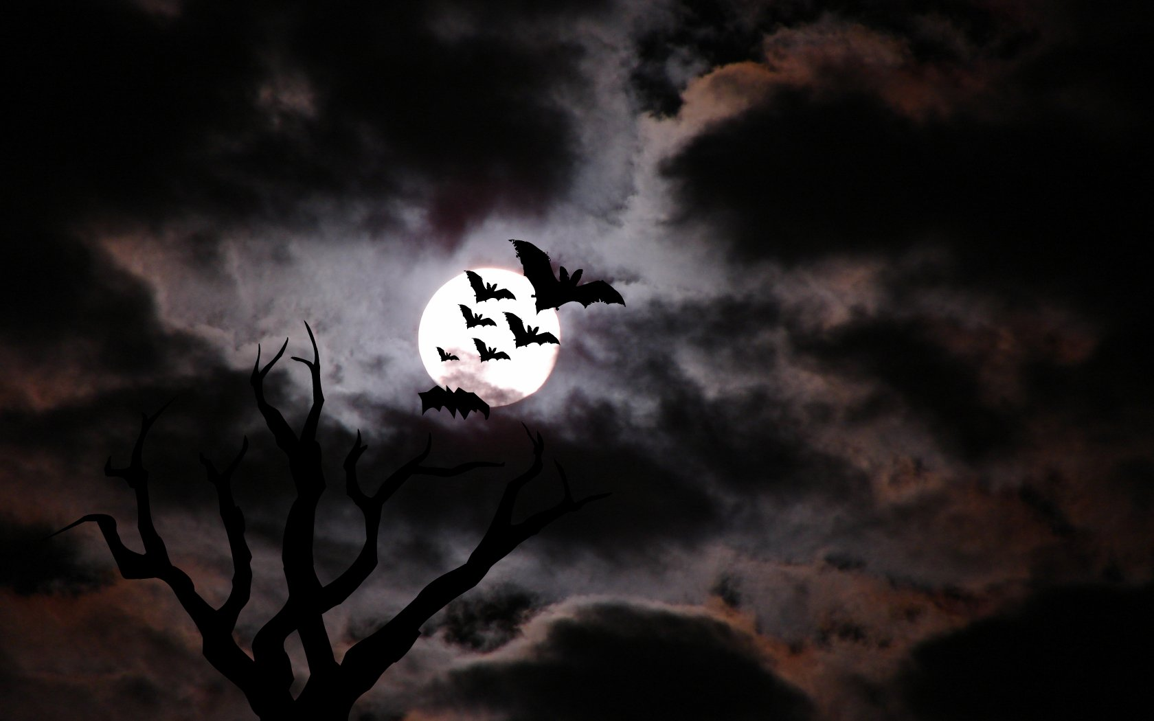 30 Scary Halloween Desktop Wallpapers Best Design 1680x1050
