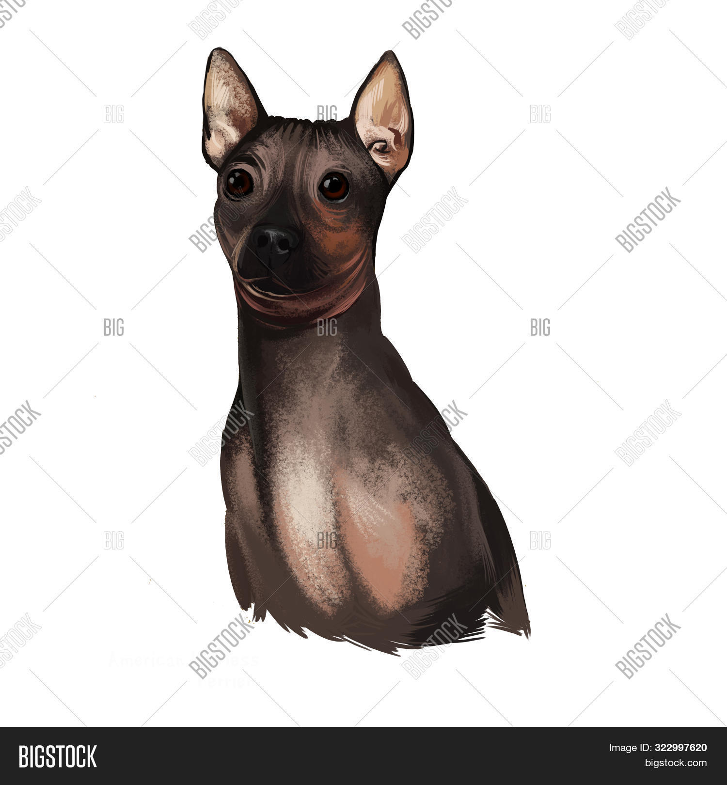 American Hairless Image Photo Trial Bigstock 1500x1620