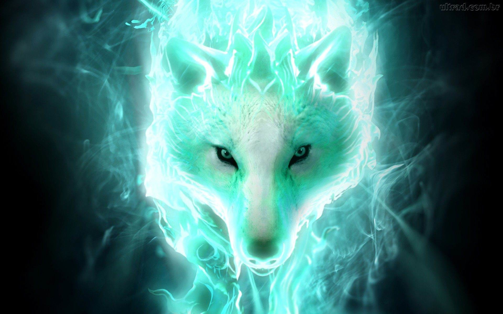71 Cool Wolf Wallpapers on WallpaperPlay 1920x1200