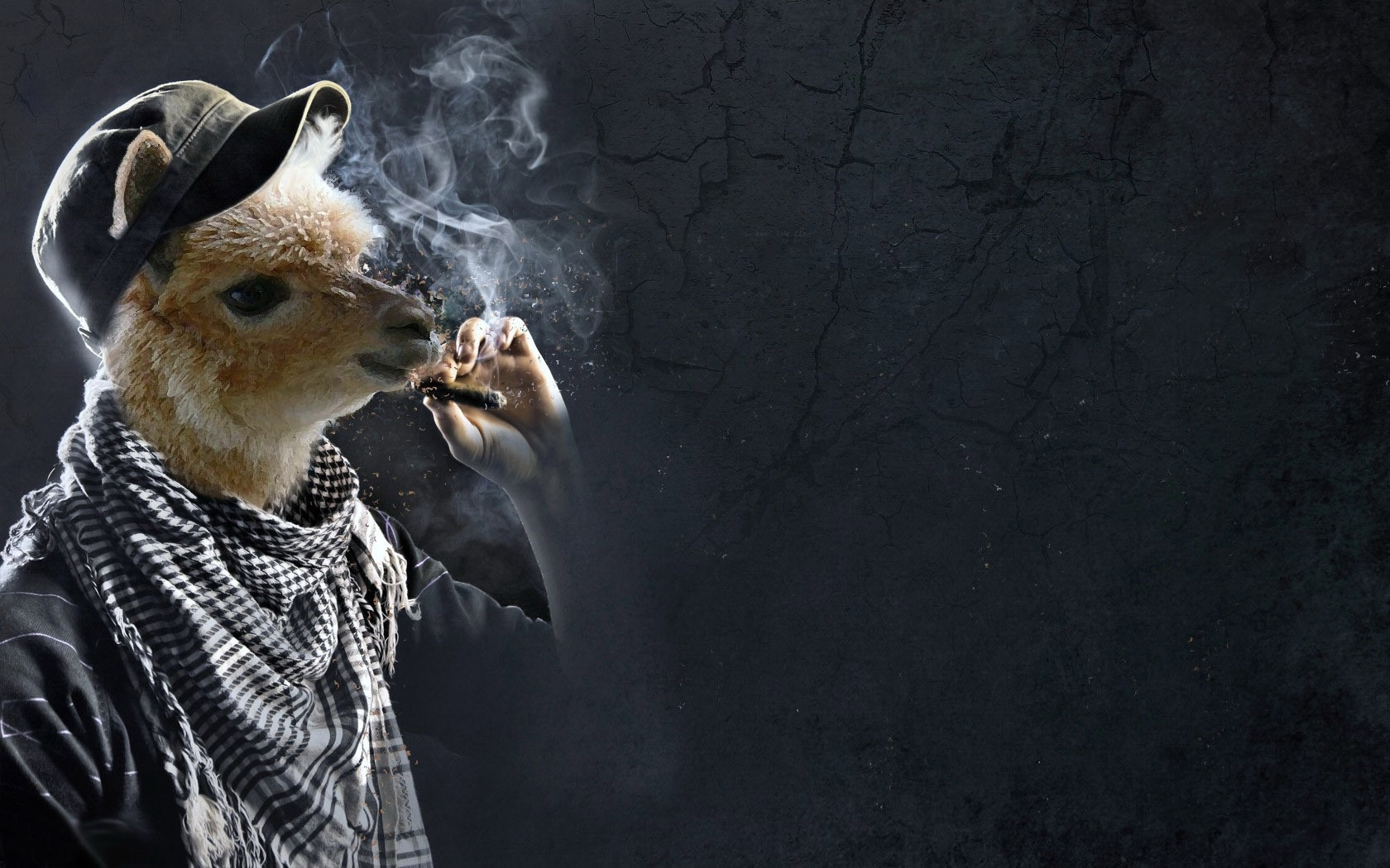 Llama Smoking Funny Wallpapers HD Desktop and Mobile Backgrounds 1680x1050