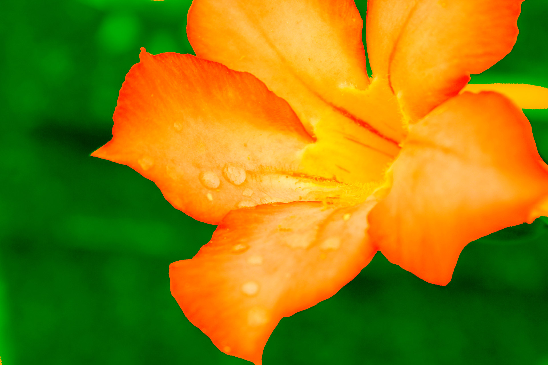 Yellow Gold Flower Background Stock Photo HD   Public Domain 1920x1280
