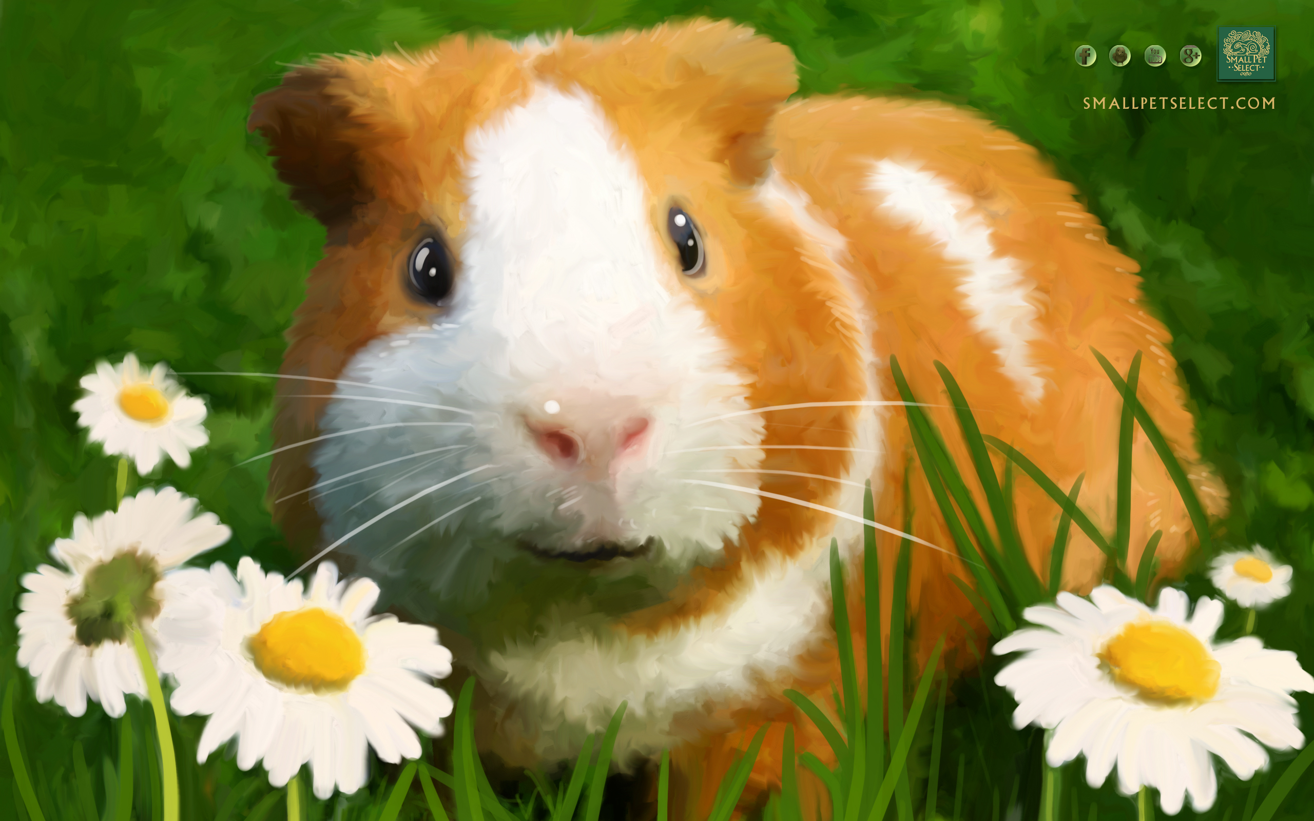 Guinea Pig Wallpaper   Screensaver for your PC MAC Ipad cell phone 2560x1600
