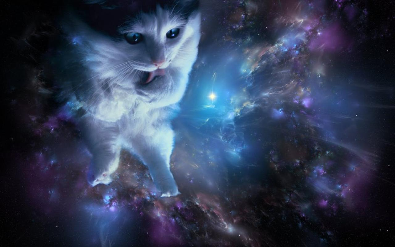 Cat in space wallpaper 1032x774 HQ WALLPAPER   24125 1280x800
