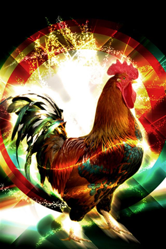 Rooster 2 Animal iPhone Wallpapers iPhone 5s4s3G Wallpapers 640x960