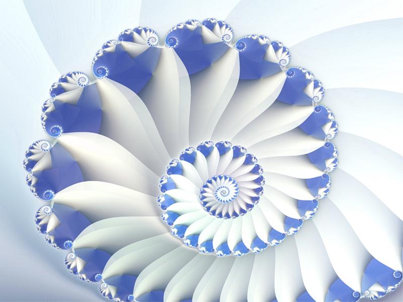 blue nautilus wallpaperjpg 800x600