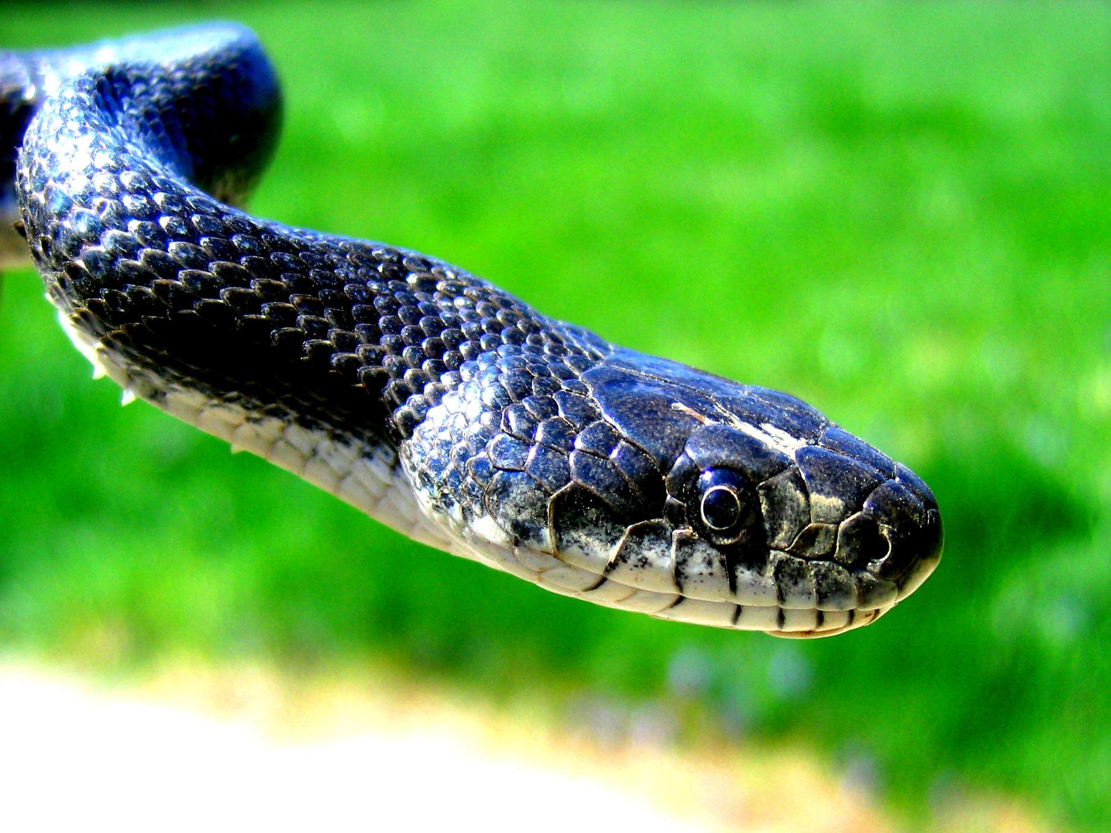 snake - HD1600×1200