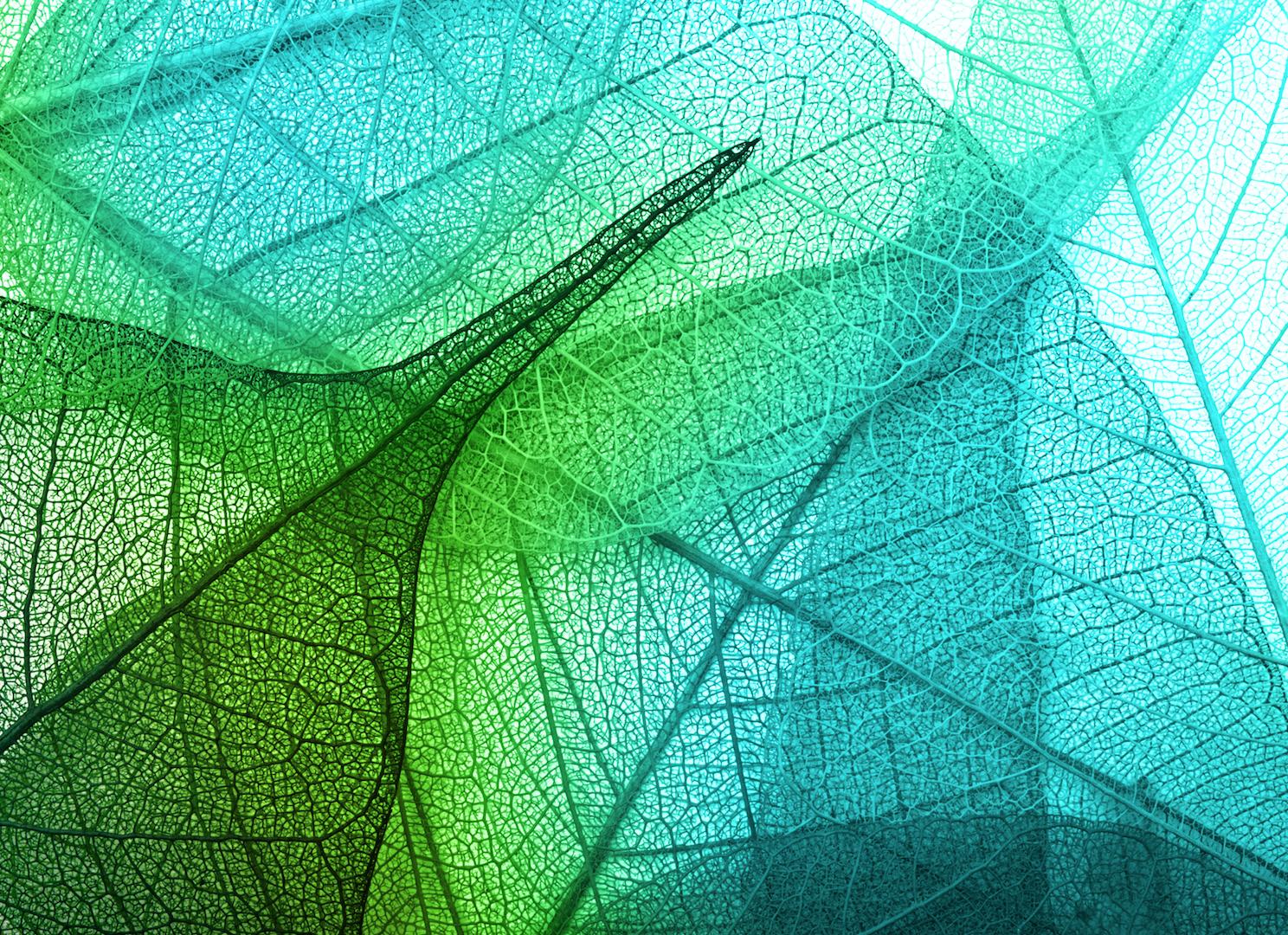Textile Trends FallWinter 202021 Green leaf background Leaf 1488x1080