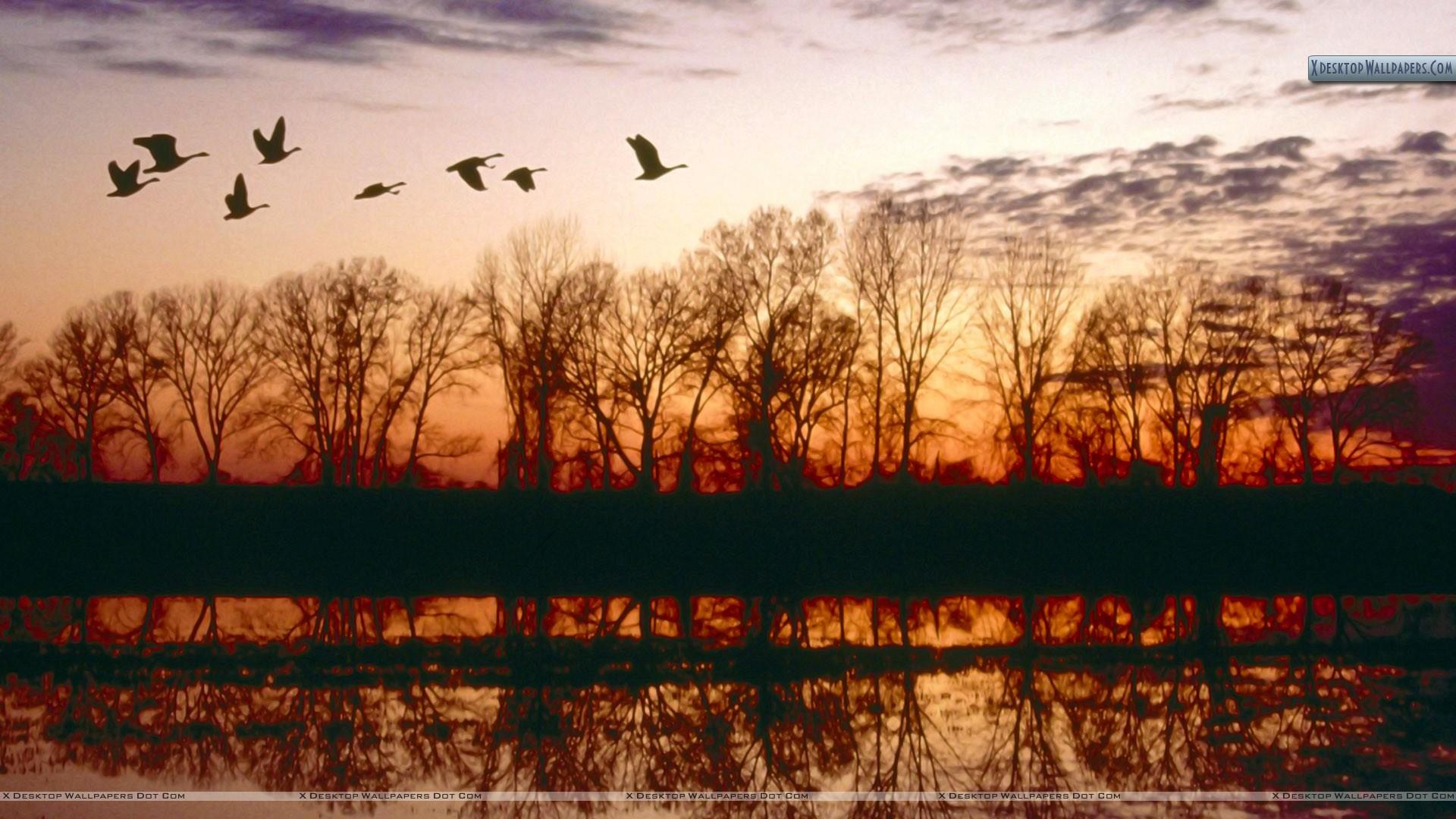 Canada Geese Migrating Missouri Wallpaper 1920x1080