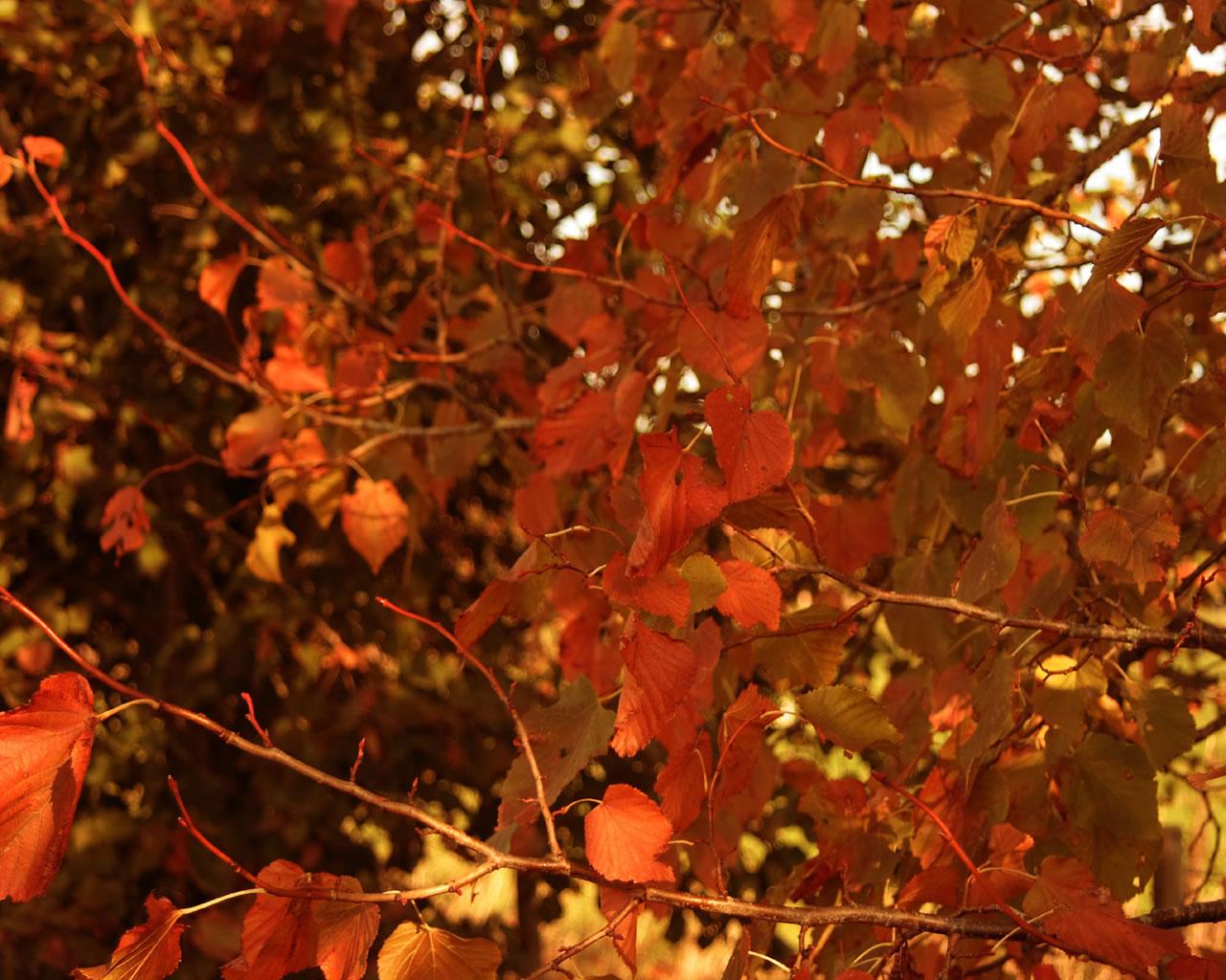 autumn wallpaper windows 7 With Resolutions 12801024 Pixel 1280x1024