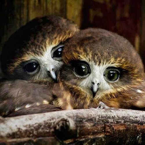 [47+] Screensavers And Wallpaper Owls On WallpaperSafari