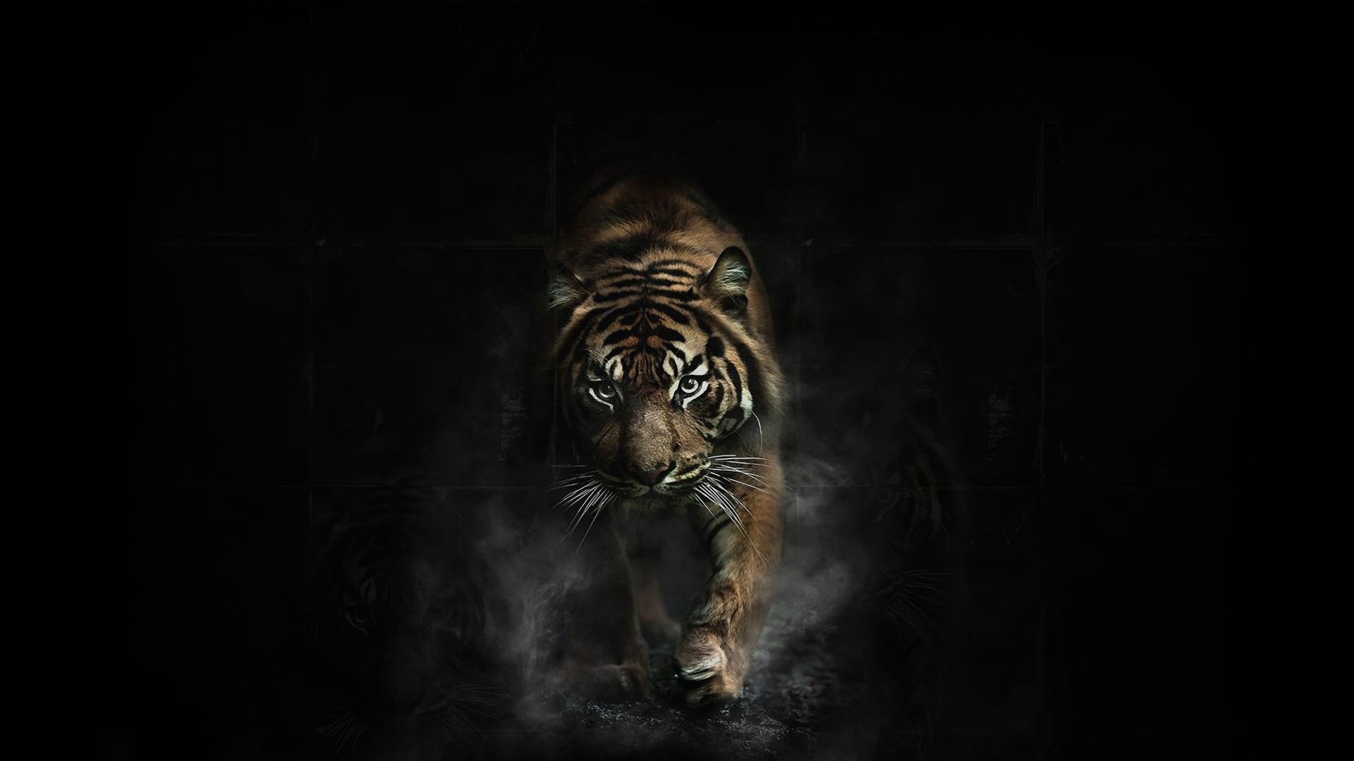 1920X1080 Tiger Wallpaper Full HD - WallpaperSafari