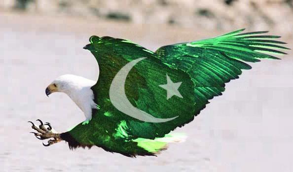 14 August Pakistan Independence Day 594x349