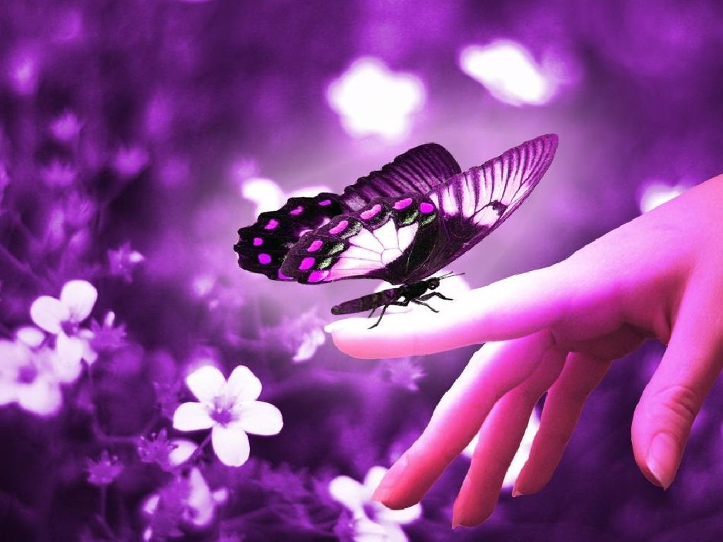 Purple Butterfly on Hand Purple Background Wallpapers Purple 1024x768