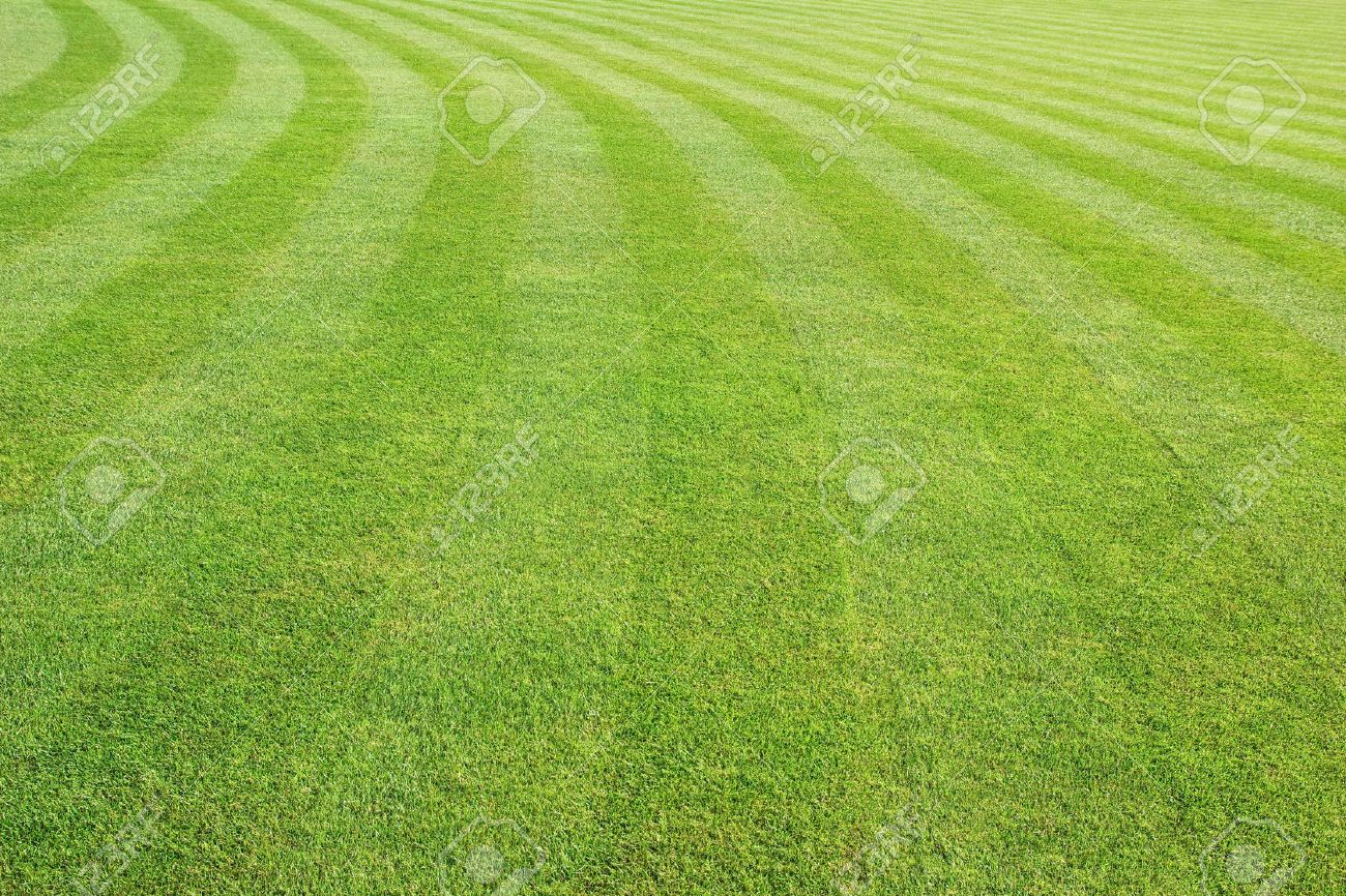 Mowed Lawn Background Stock Photo Picture And Royalty Image 1300x866