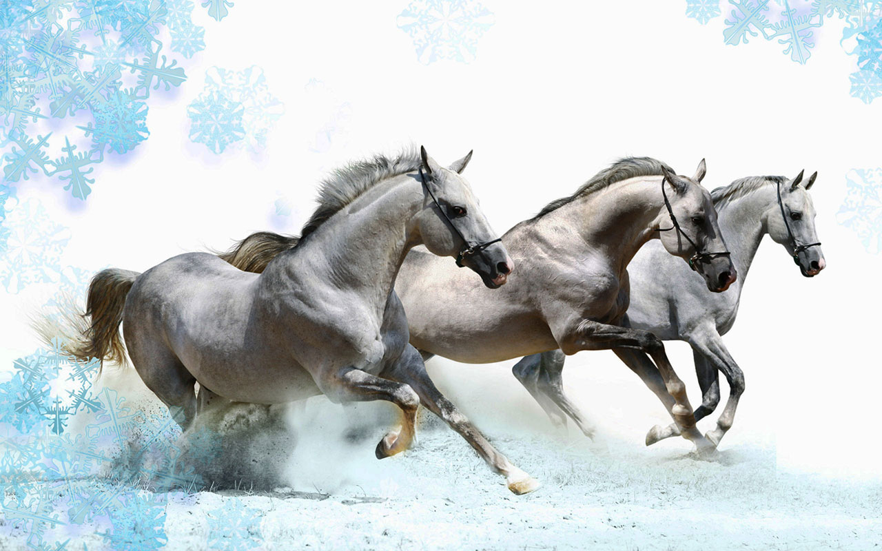 Free horses wallpapers for windows wallpapersafari - Free horse backgrounds ...