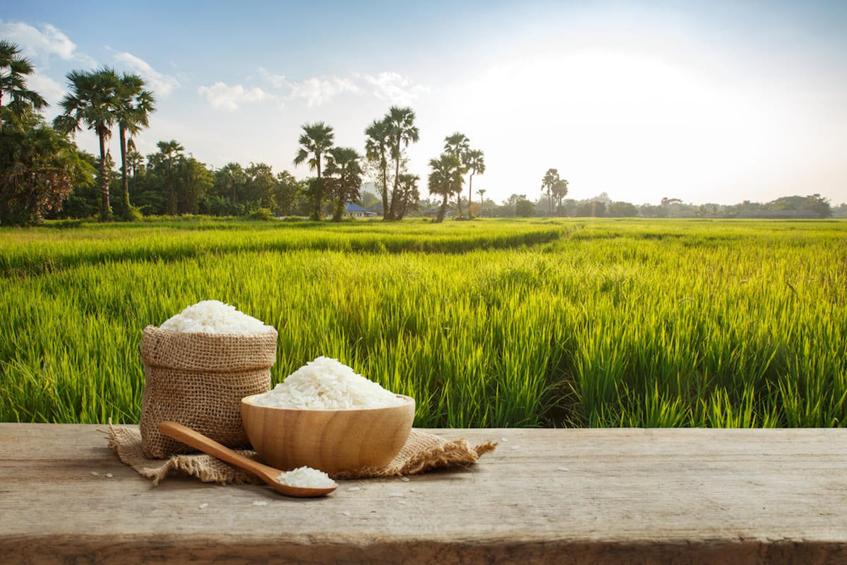 Asian uncooked white rice with the rice field background Envirotec 1200x800
