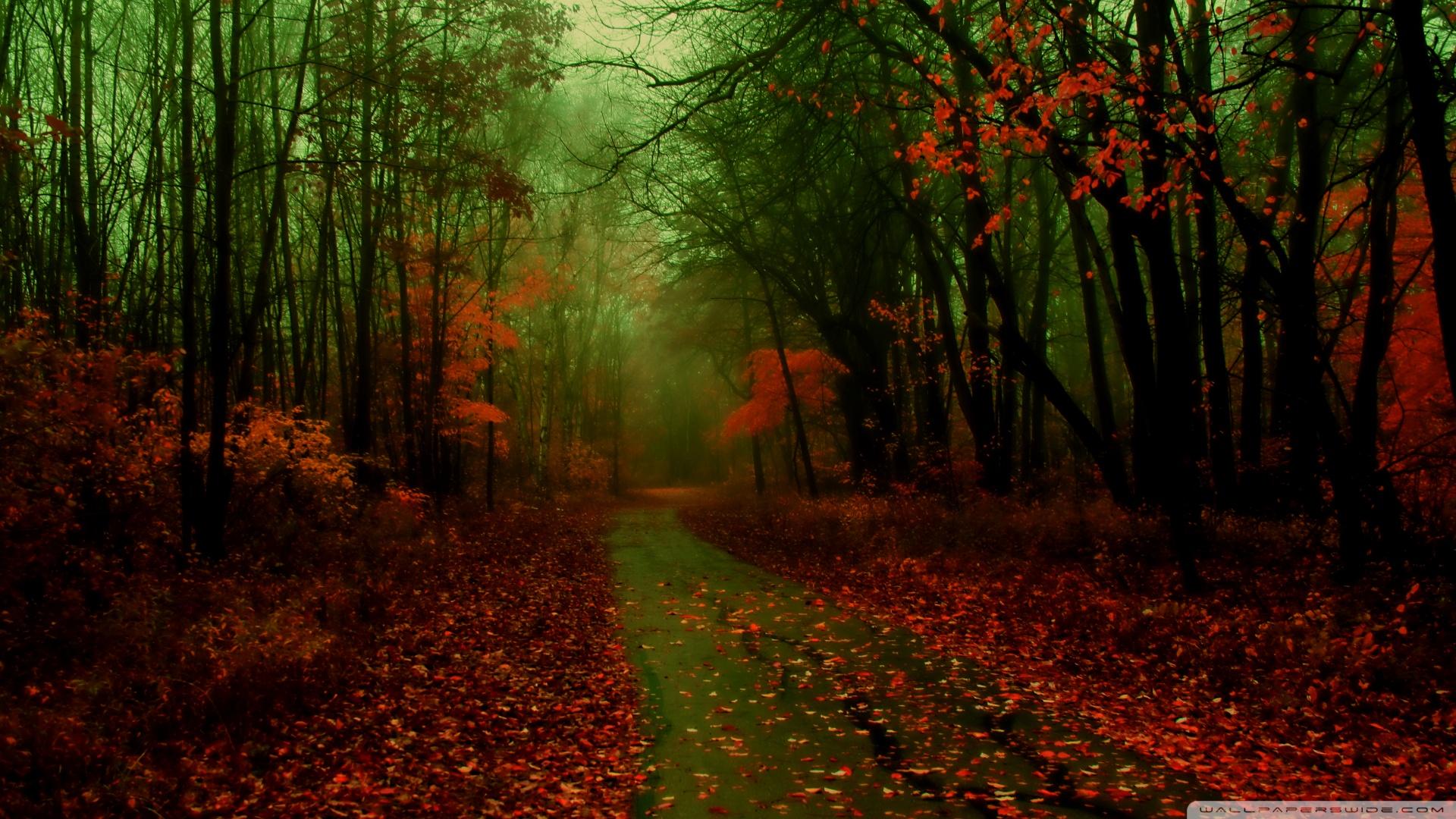 40 Autumn Scene Background Wallpaper for Desktop 1920x1080
