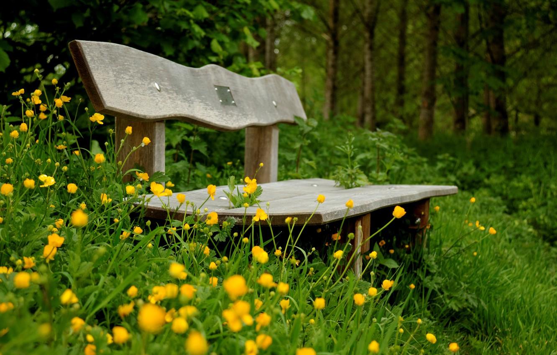 Wallpaper greens flowers bench green background widescreen 1332x850