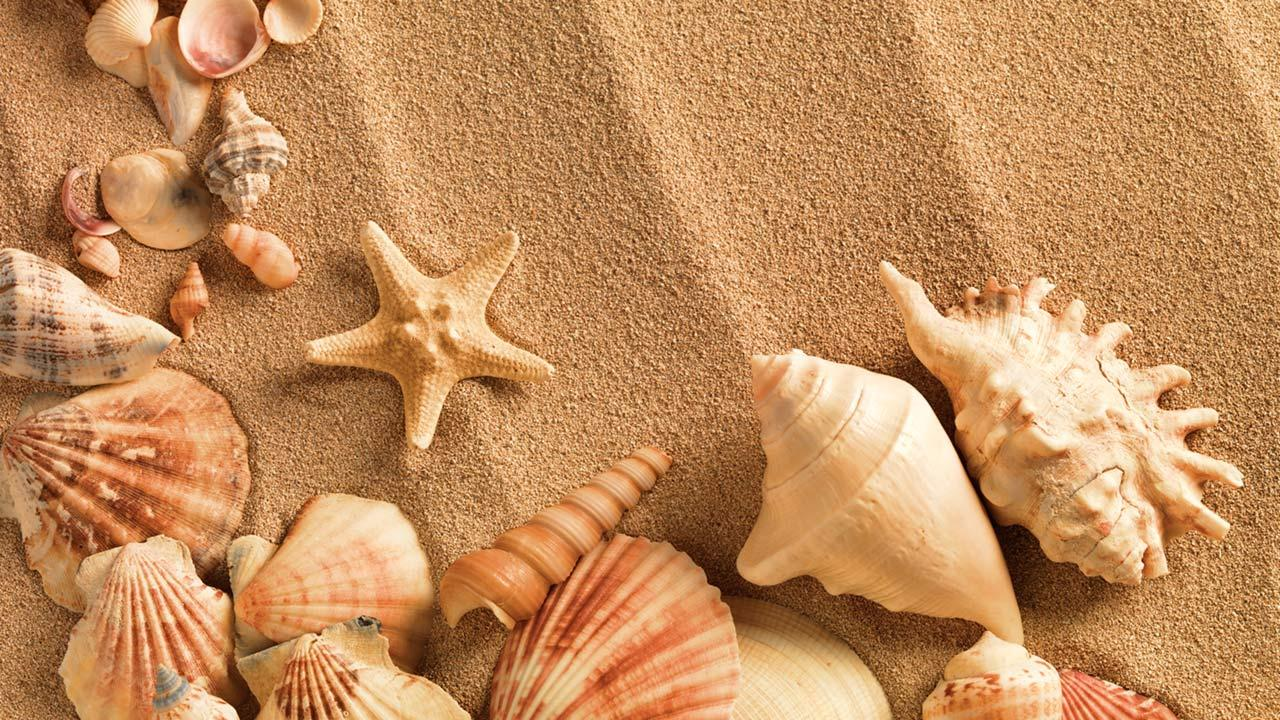 Shell Wallpapers and Background Images   stmednet 1280x720