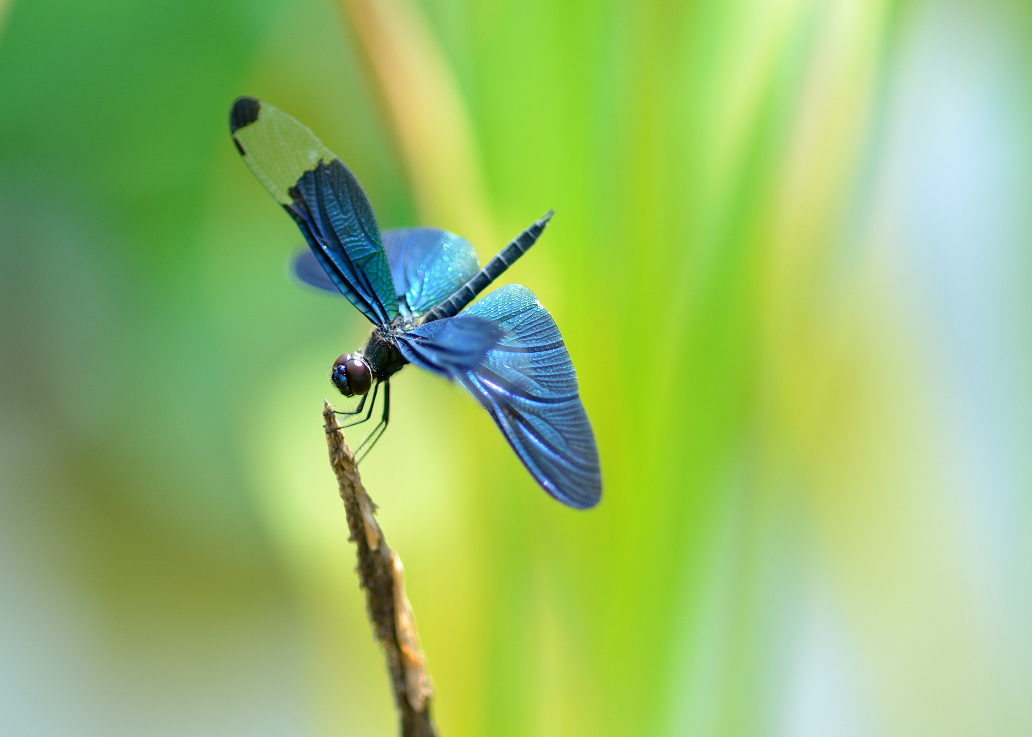 Blue Dragonfly Wallpaper For Android 3707 Wallpaper Wallpaper 2048x1463