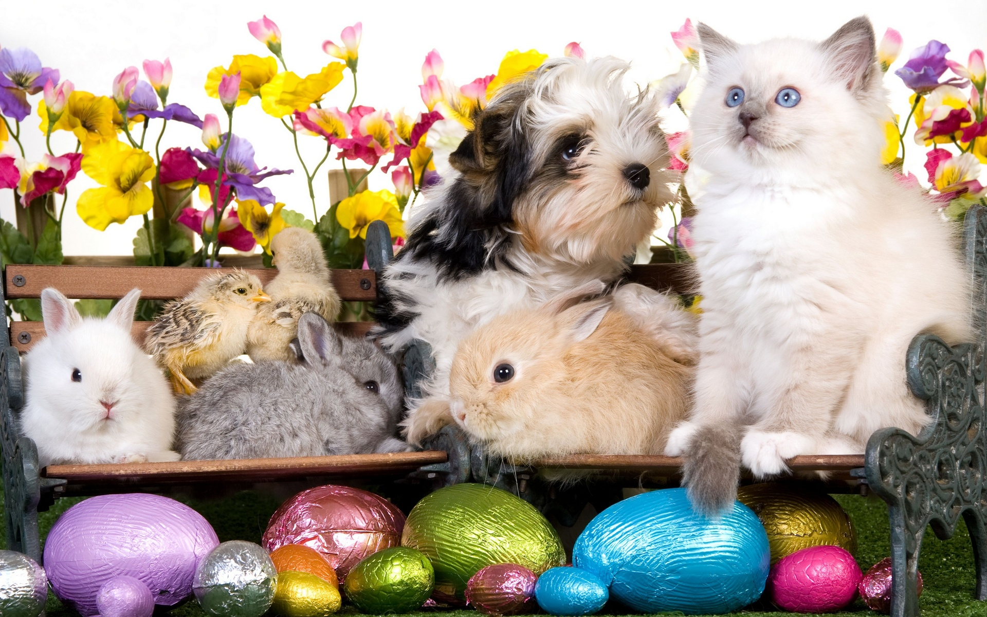 Kitten dog puppy rabbits chickens eggs flowers easter wallpaper 1920x1200