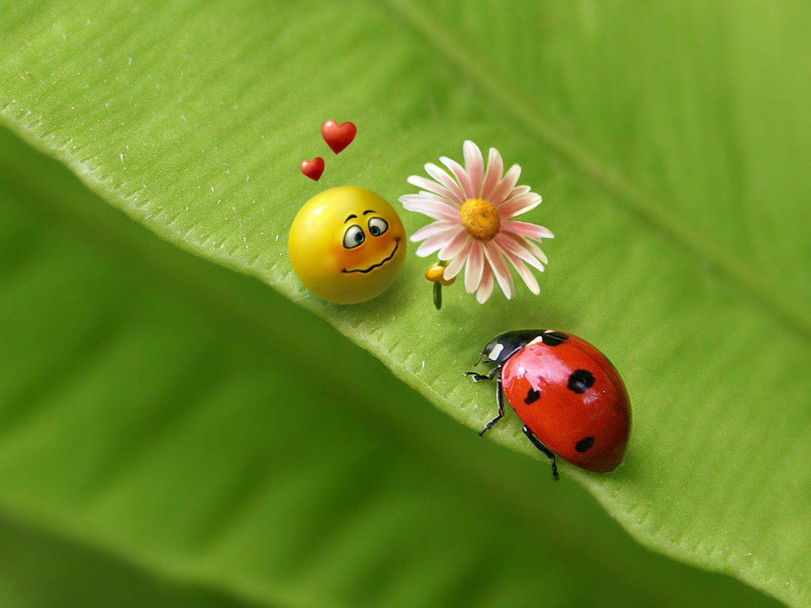Pin by Victor Lee on Insects Ladybug Love wallpaper Ladybug picnic 1600x1200