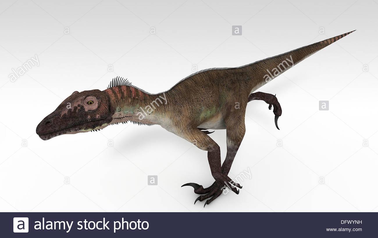 Utahraptor dinosaur white background Stock Photo 61421517   Alamy 1300x821