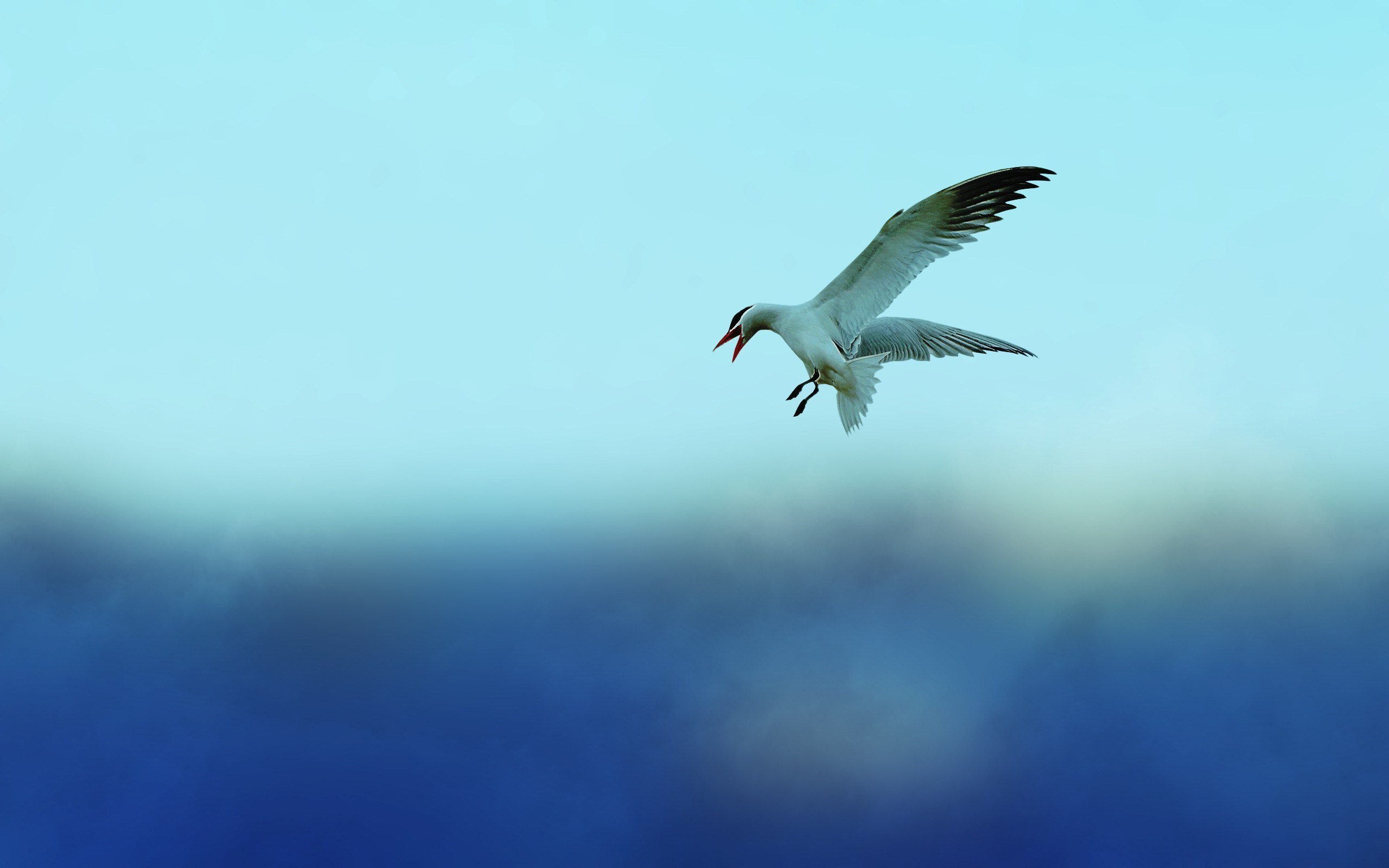 Birds Flying In The Sky HD Wallpaper Background Images 2560x1600