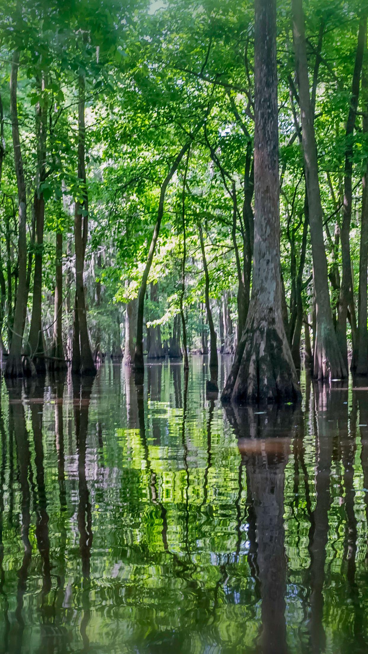 65 Swamp iPhone Wallpapers   Download at WallpaperBro 1242x2208