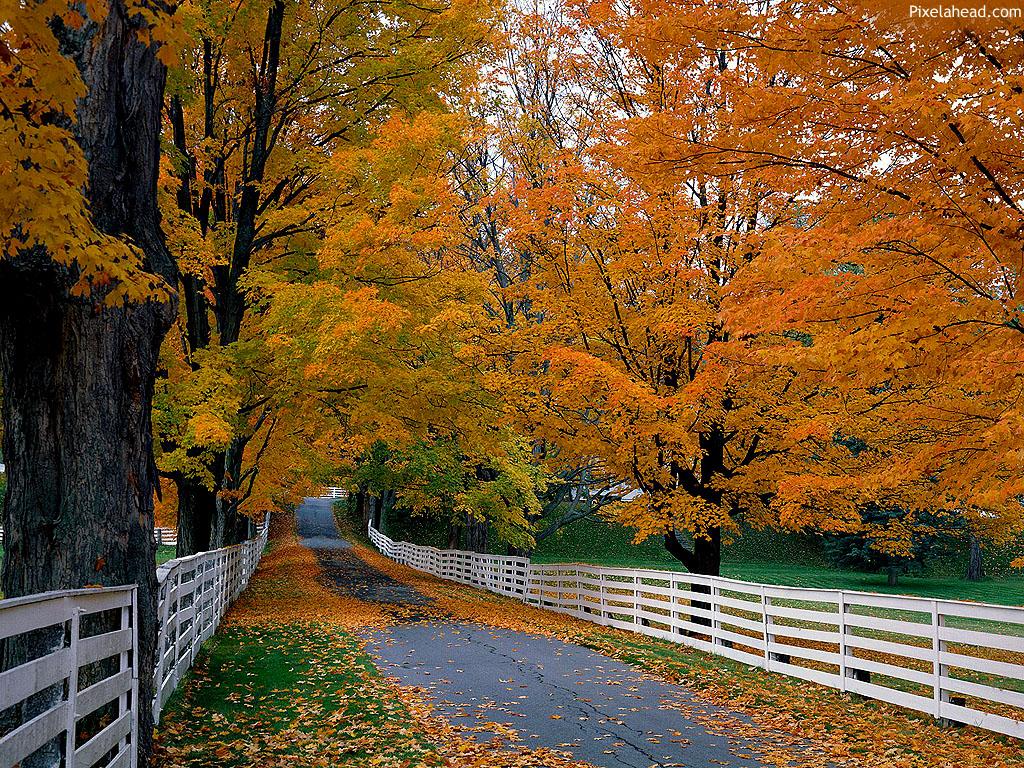Fall wallpaper Deary Chibbi 1024x768
