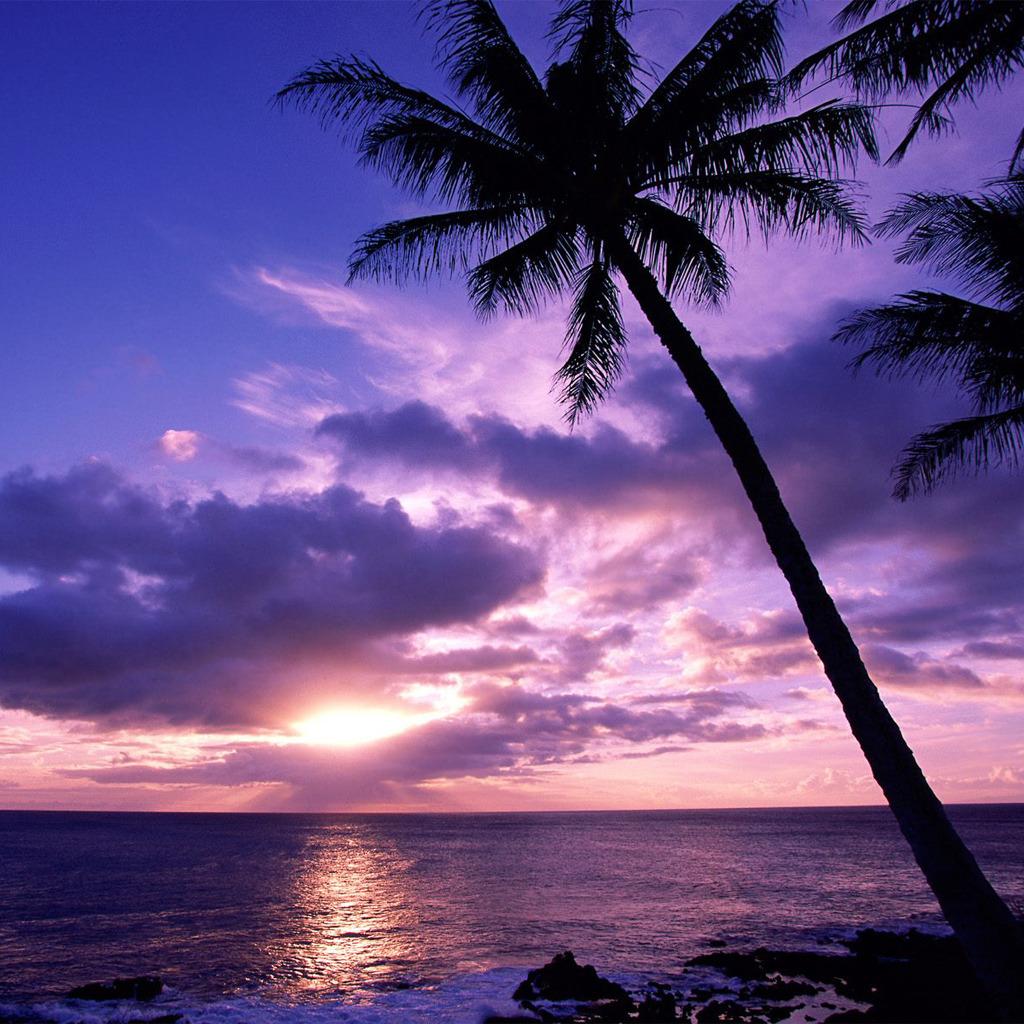 Palm Tree At Sunset iPad Wallpaper ipadflavacom 1024x1024