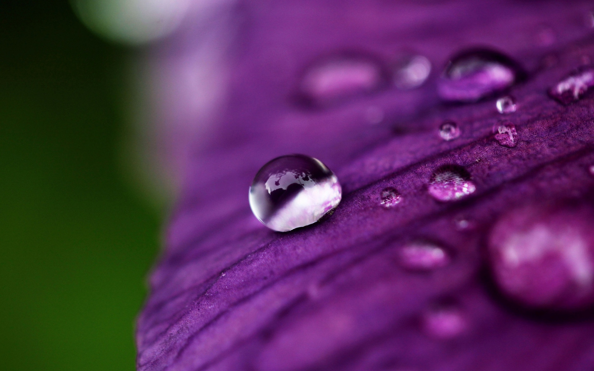 Круглая капля на лепестке цветка  № 3234283  скачать