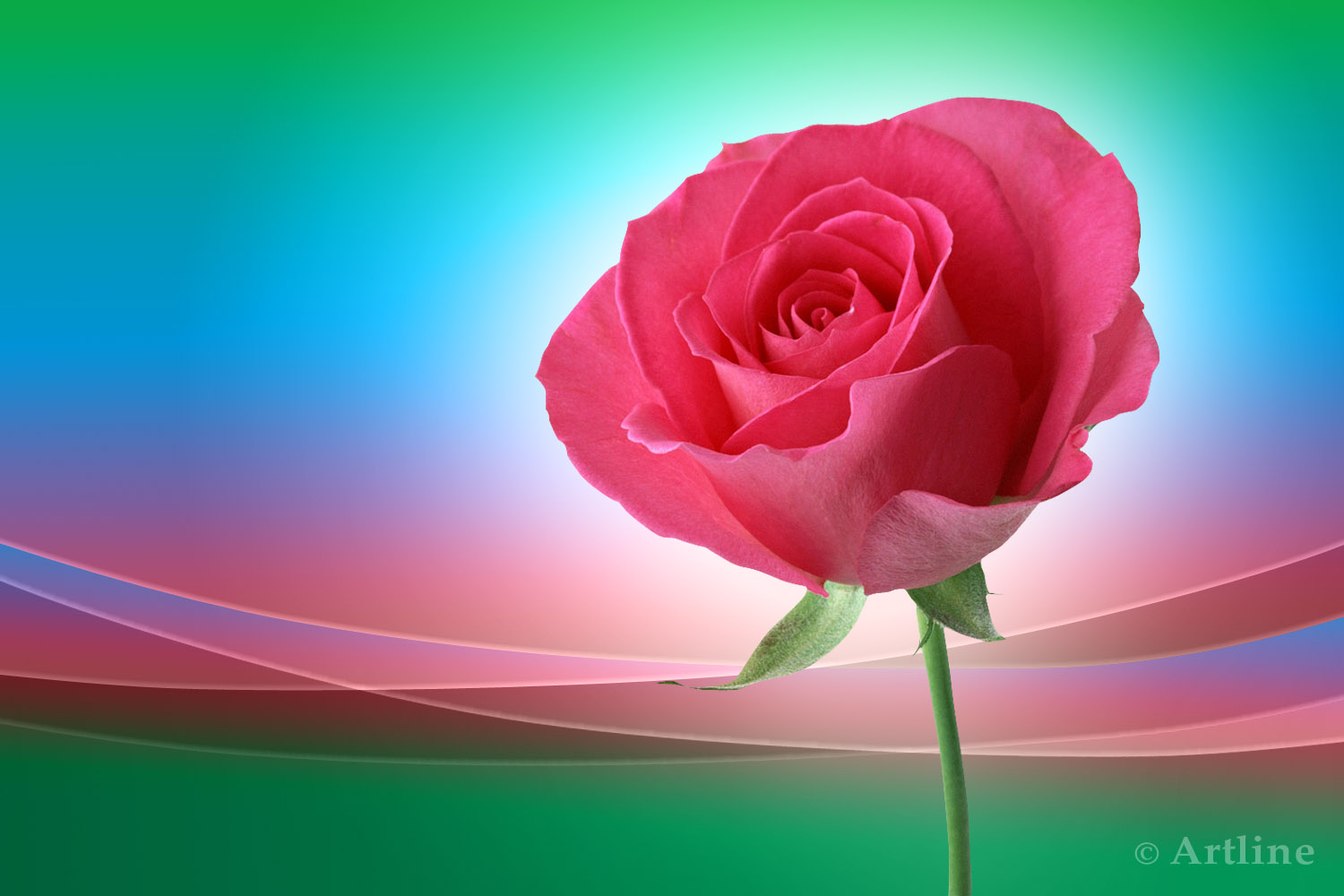 pink rose on wave lovely pink rose on beautiful ground for your 1500x1000